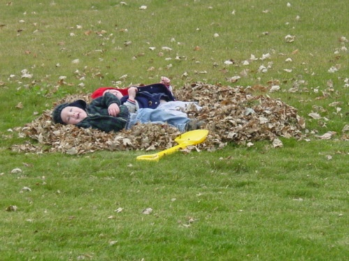 pile-of-leaves-far.jpg